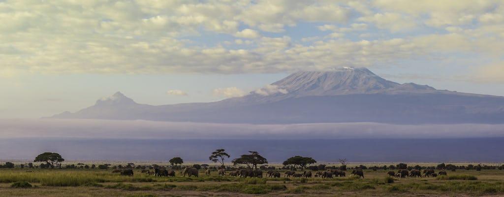 Day hike on Mount Kilimanjaro from Arusha