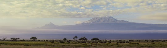 Day hike on Mount Kilimanjaro from Arusha