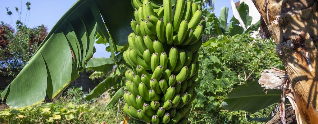 Finca Las Margaritas – Banana Experience
