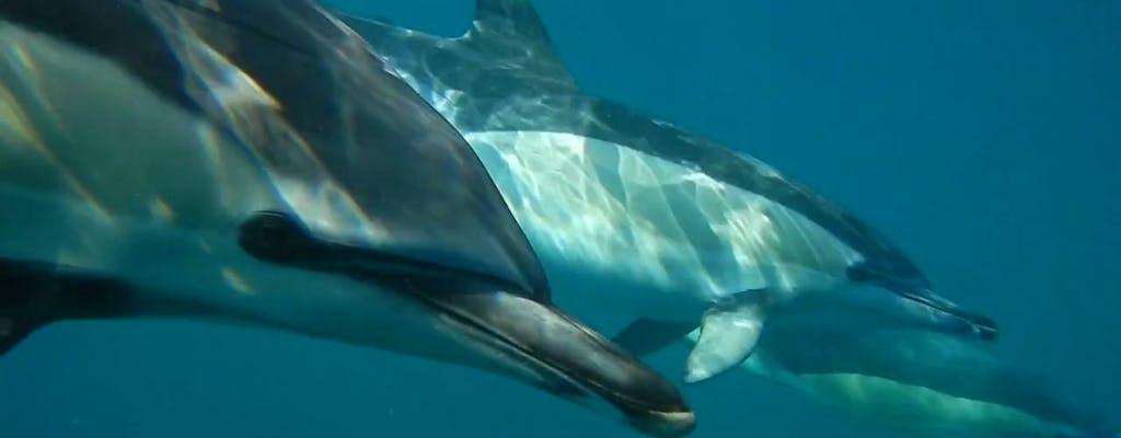 Wycieczka łodzią z delfinami z Lizbony