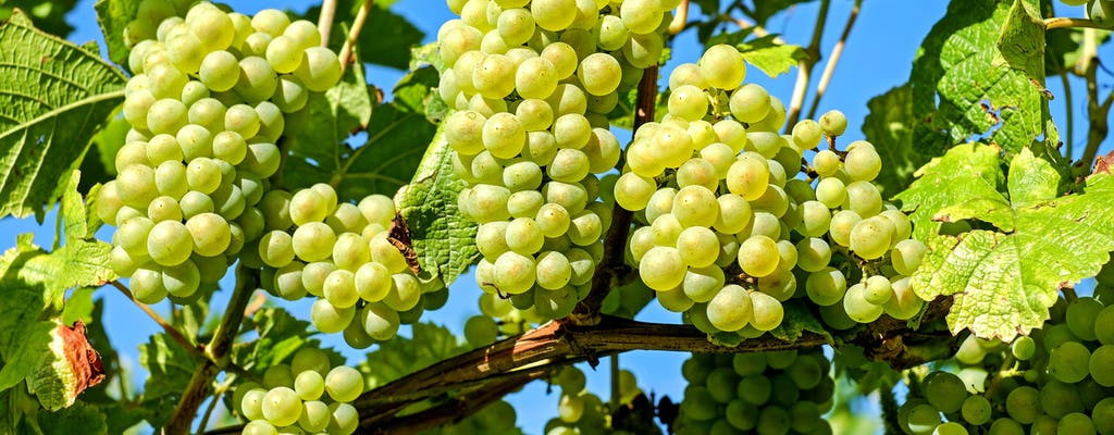 BARANJA: THE LAND OF WINES