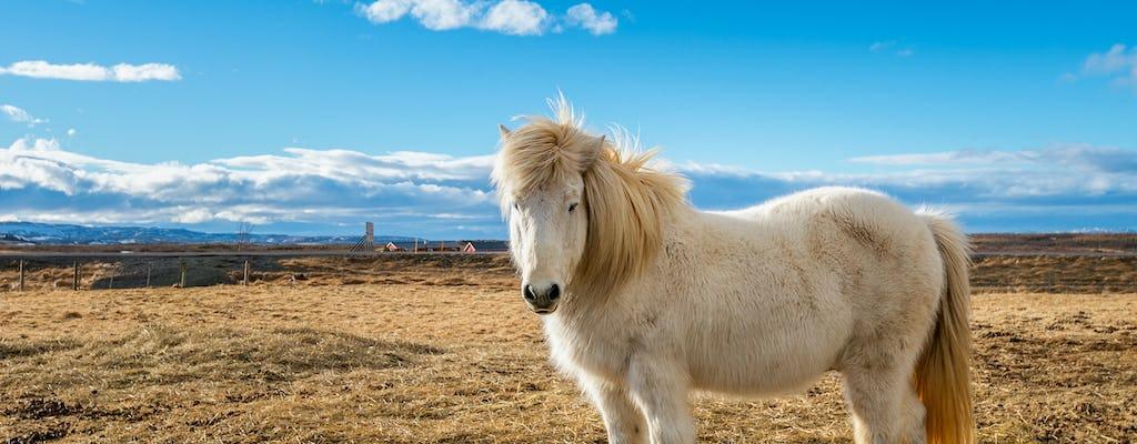 Viking Icelandic horse and Golden Circle Tour