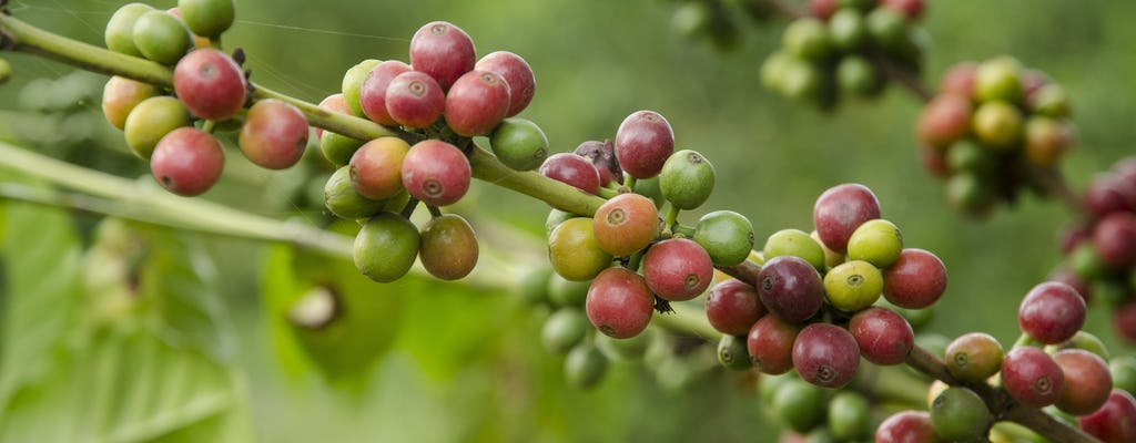 Burka Coffee Estates half-day tour from Kilimanjaro