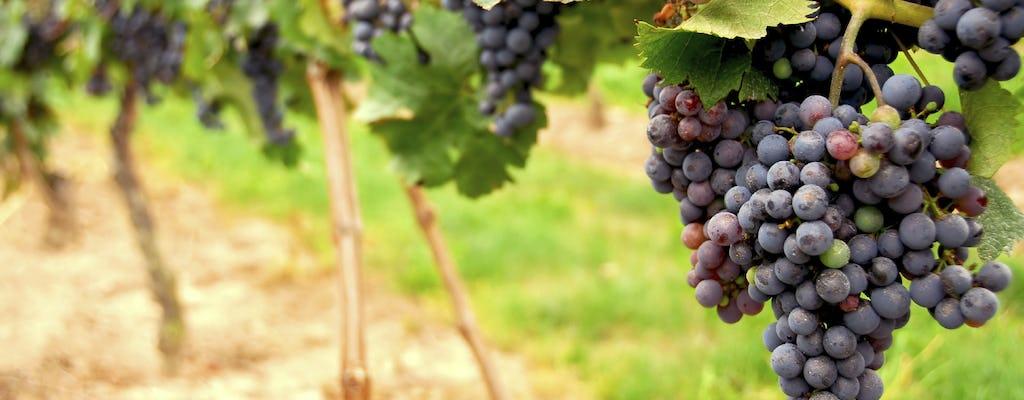 Scopri il tour del Wine Country
