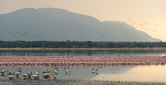 Safari di 2 giorni nel Parco Nazionale del Lago Manyara dal Kilimangiaro
