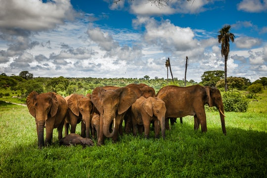 Tarangire National Park 2-day safari from Kilimanjaro