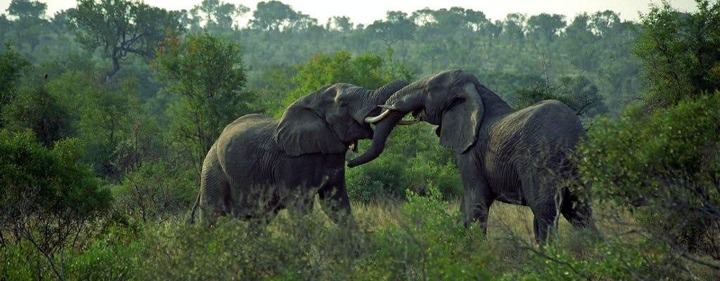 Selous Game Reserve 3-dniowe safari