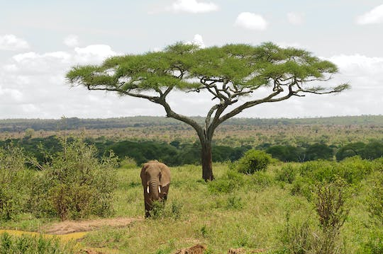Tarangire National Park 2-day safari from Arusha
