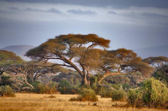 Parque Nacional del Lago Manyara Safari de 2 días desde Arusha
