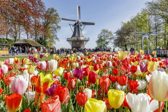 Day trip to Keukenhof flower fields, Volendam and Windmills from Amsterdam