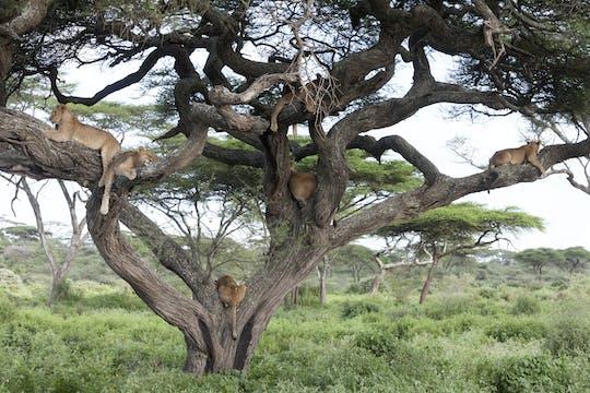 Park Narodowy Serengeti 3-dniowe safari z Arushy