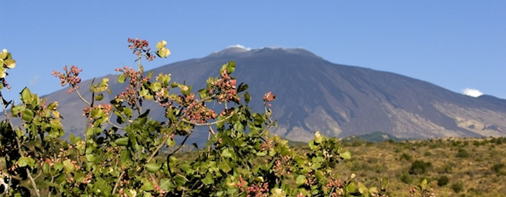 Bronte pistachio estate tour and 3-course lunch including transfer from Catania