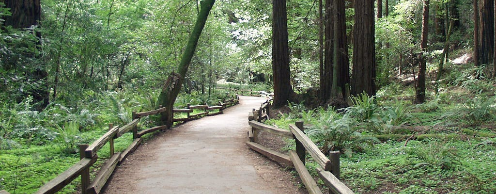 California Redwoods tour with Aquarium of the Bay admission