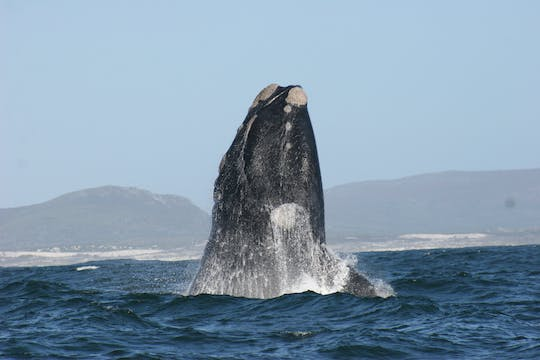Dyer Island Marine Big 5 boat tour from Cape Town