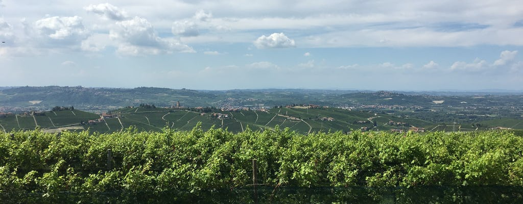 Barolo wine experience in the Langhe