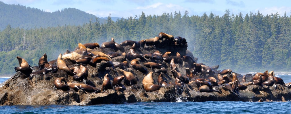 Port Renfrew whale watching and wildlife tour