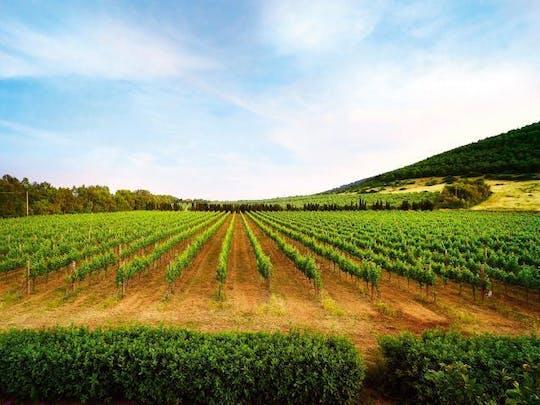 Vineyards & Olive groves