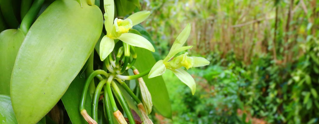 Sansibar Gewürzplantage halbtägige private Tour