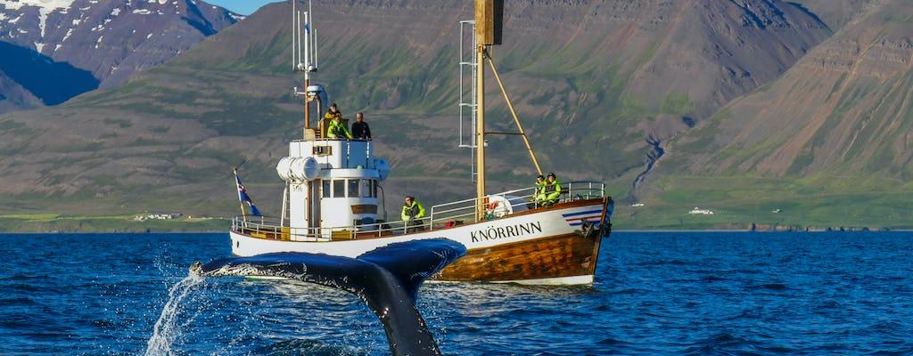 Passeio de observação de baleias em Hjalteyri, Islândia