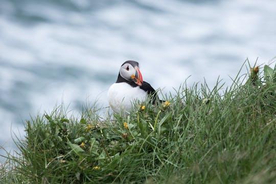 Papegaaiduikerreis IJsland: Húsavík walvissen spotten en papegaaiduikers