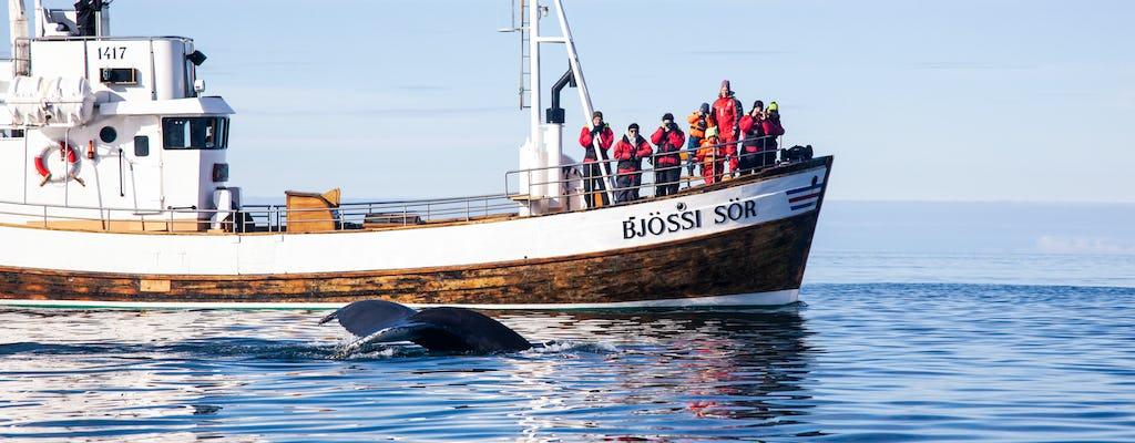 Oryginalny obserwujący wieloryby Husavik