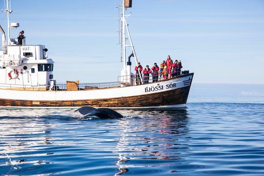 The original Husavik whale watching