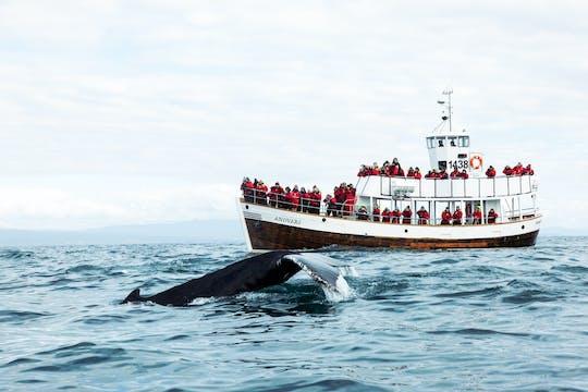 Observation écologique des baleines (visite neutre en carbone)