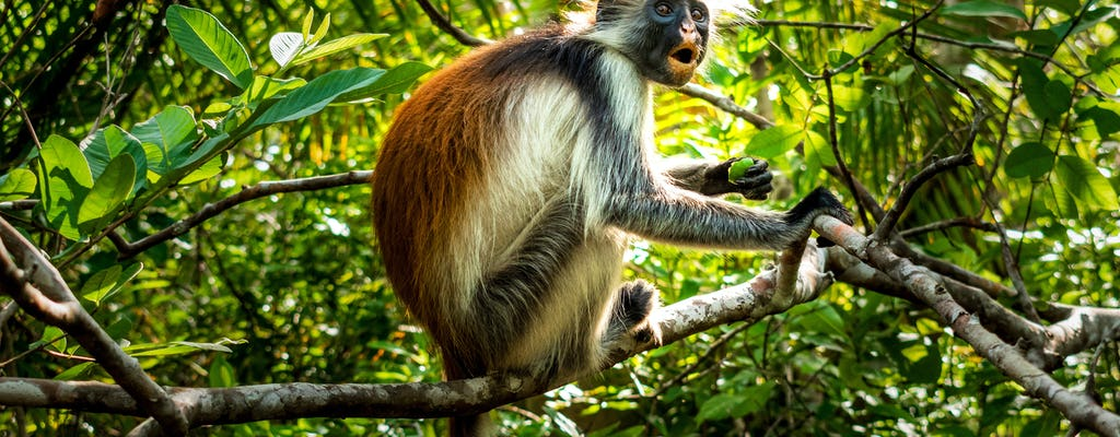 Spice plantation and Jozani forest private tour