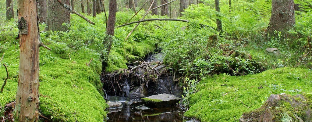 Enjoy a guided walk in Nordmarka forest