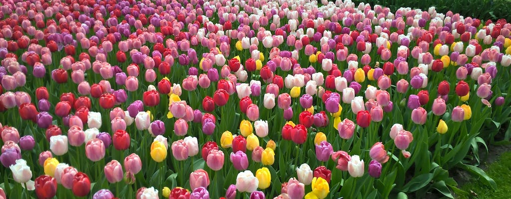 Tulips and windmills small-group tour with Keukenhof skip-the-line ticket