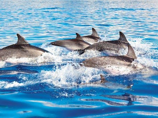 Isla Mujeres Dolphin Swim Tour