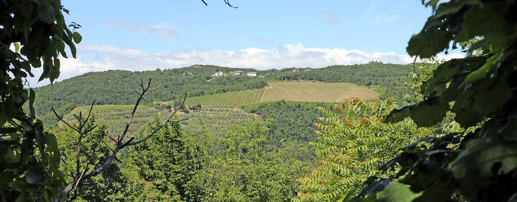 Colli Berici tour and tasting in the Palladian countryside