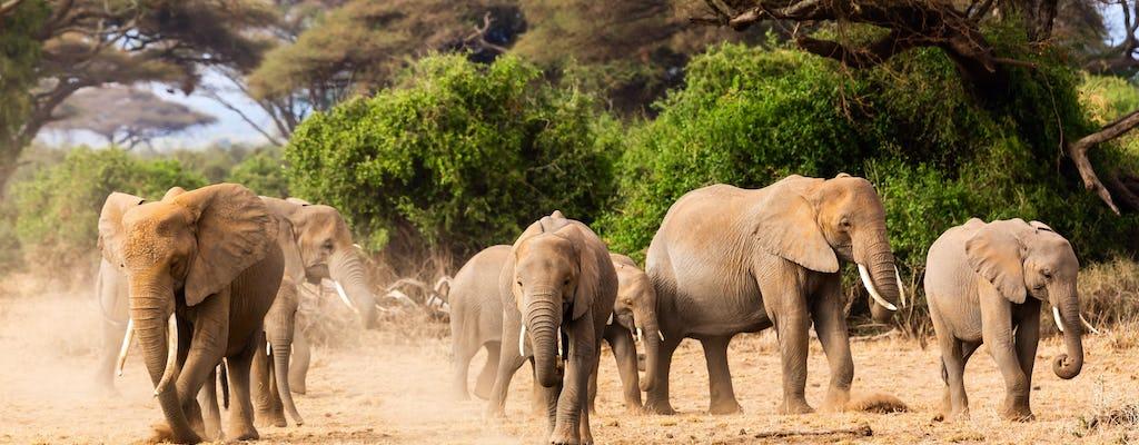 Safari del Serengeti di 3 giorni dal Kilimangiaro