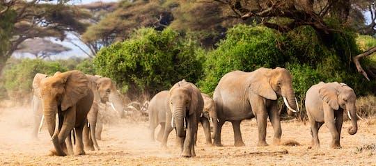 Safari au Serengeti de 3 jours au départ du Kilimandjaro