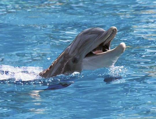 Dolphin Cove Montego Bay Tour
