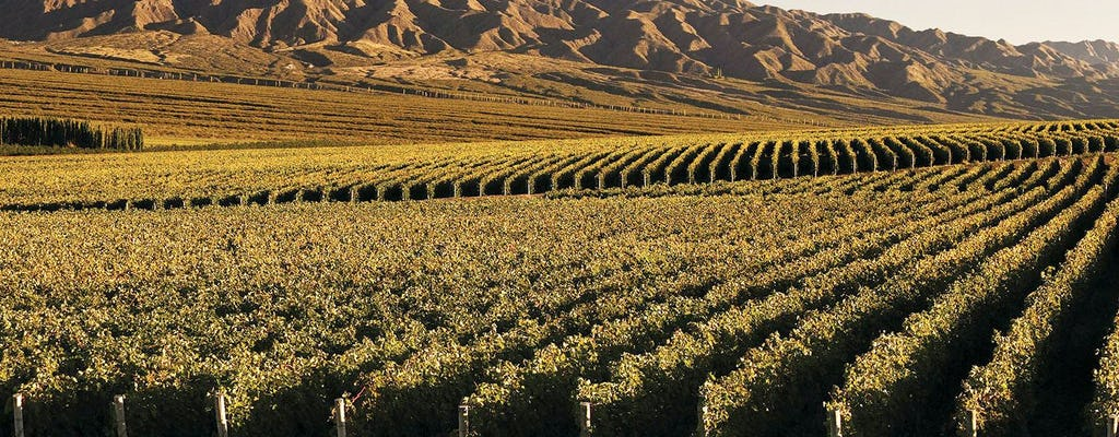 South wine route guided tour with tasting