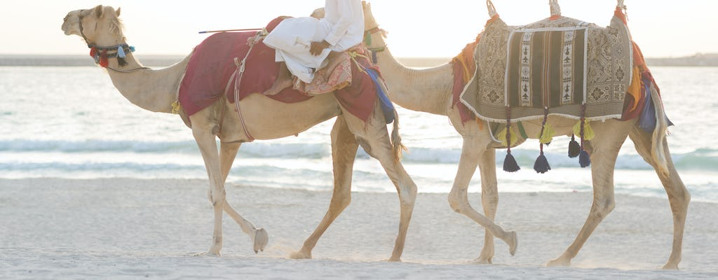 Abu Dhabi sunset camel trekking and barbecue dinner