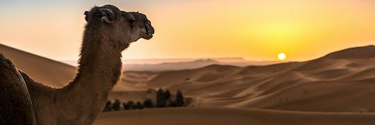 Dubai sunrise camel trek con desayuno