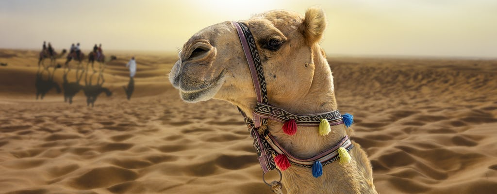 Sunset camel trek with shows and bbq at Al Khayma from Dubai