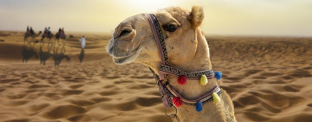 Sunset wielbłąd wędrówki z pokazami i grillem w Al Khayma z Dubaju