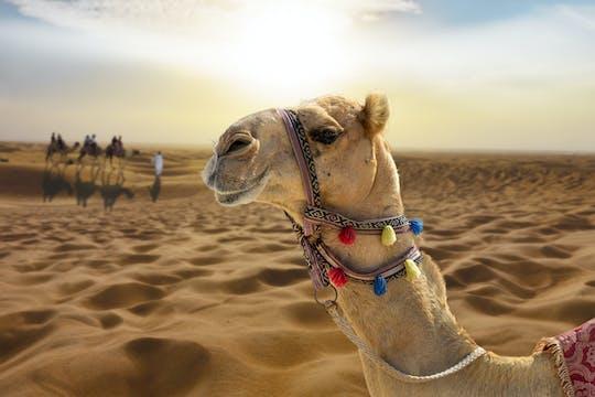Закат верблюда с шоу и барбекю в Эль-Хайма из Дубая