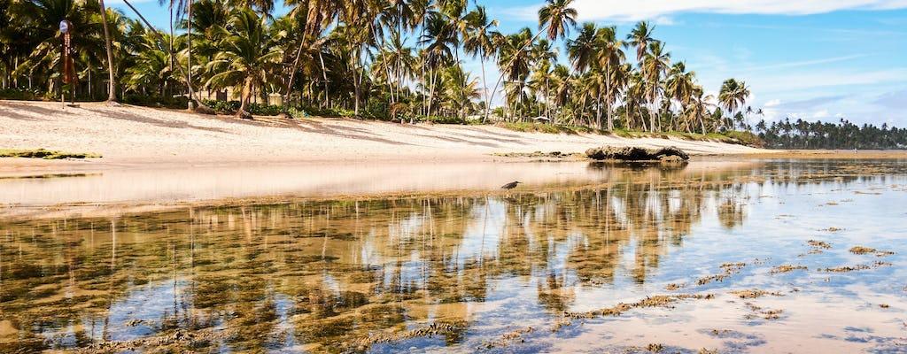 Visita guiada ao Projeto Praia Do Forte e Tamar