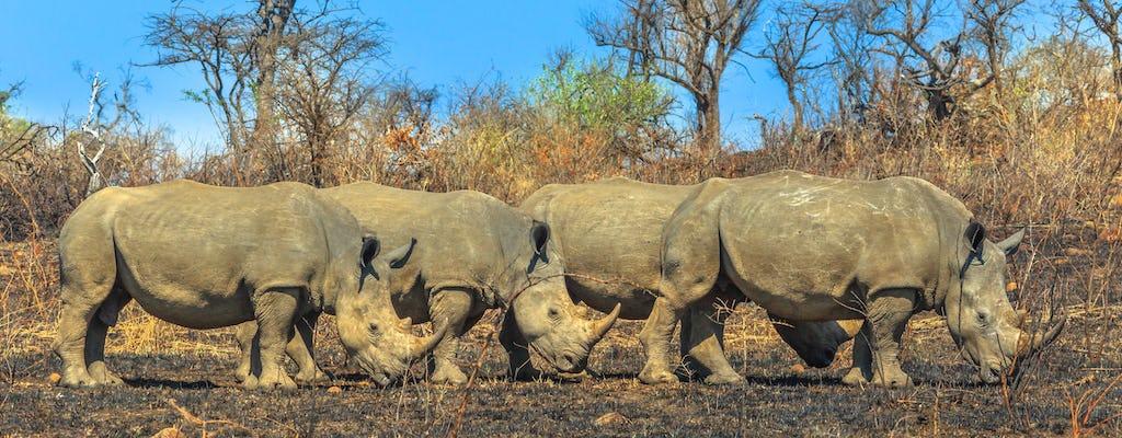 Vanuit Durban: Hluhluwe-Imfolozi Park-tour van een hele dag
