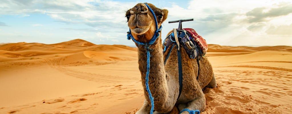 Safari no deserto de Doha, passeio de camelo, sandboard e mar interior