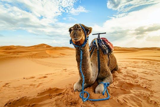 Doha desert safari, camel ride, sandboarding and inland sea