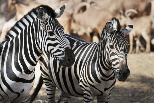 Billet pour Oasis Wildlife Fuerteventura avec transferts