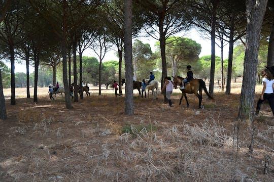 Chiclana Pine Wood Horse Ride