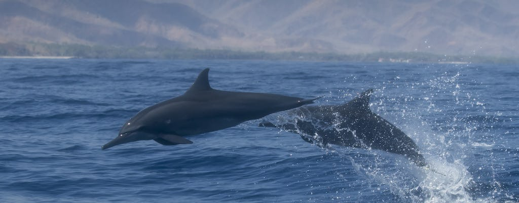 Dolphin watching in Salalah