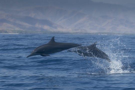 Дельфинами в Салала