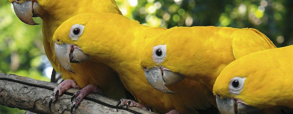 Visita guiada ao Parque das Aves com transporte